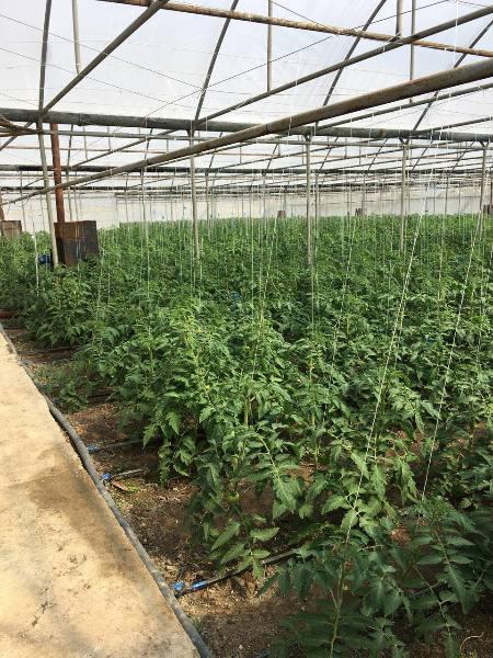 فروش گلخانه و زمین در ارمنستان